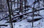 Snowlogs