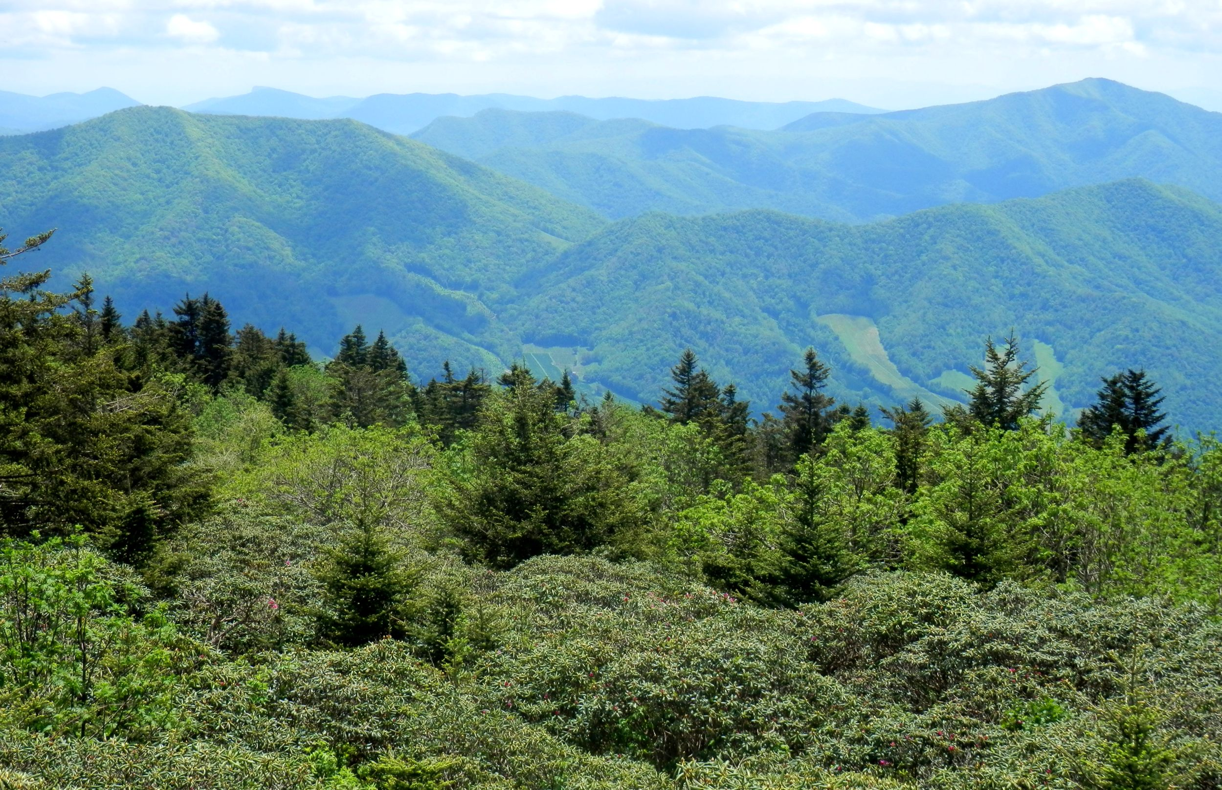 Atop roan mountain on the tennessee border living in the for Living on a mountain