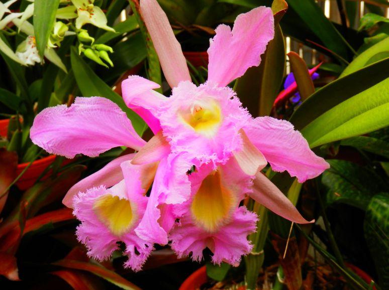 Biltmore Orchid 1