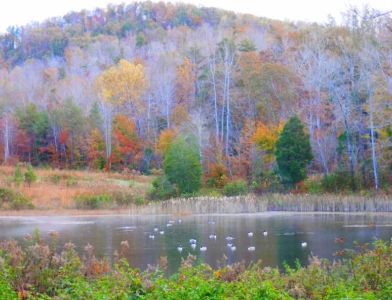 Otter Pond Geese