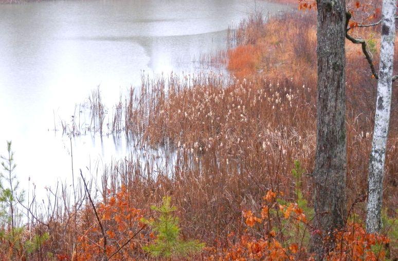 Otter Pond Rain