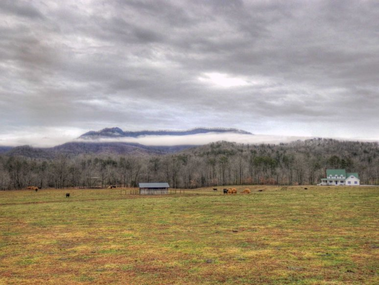 Fog Pasture