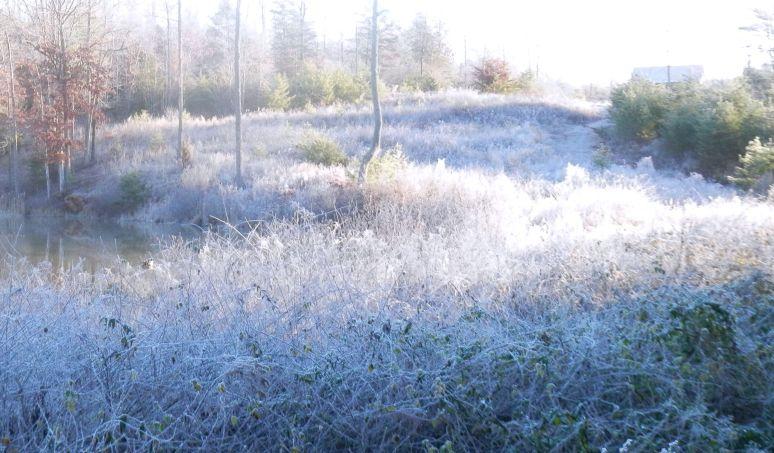 Frosty Hillside