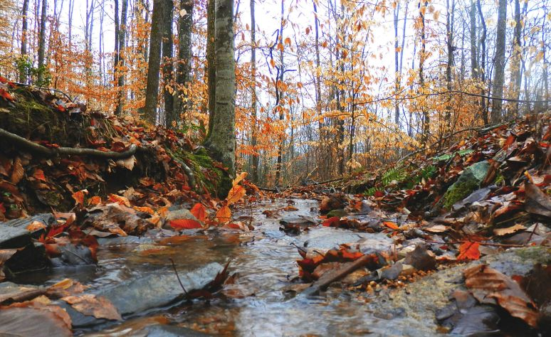 Hardwood Forest Creek