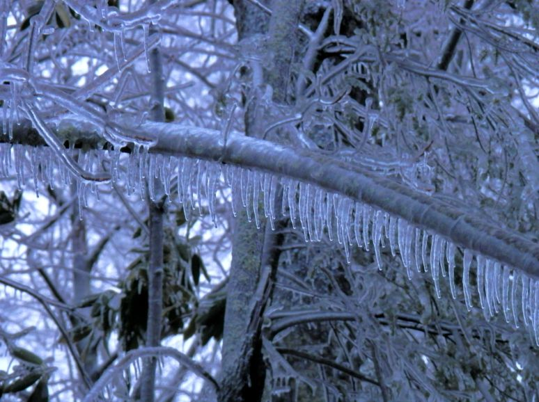Icicle Limbs