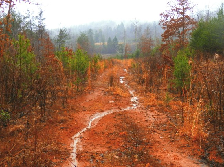 Red Clay Logging Road
