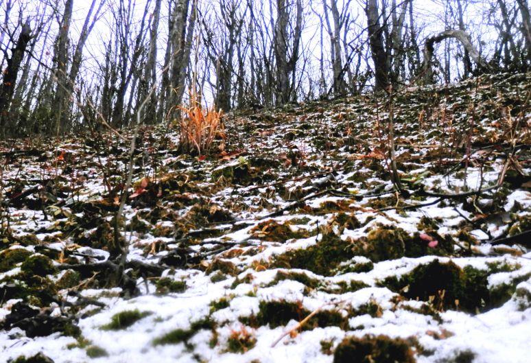 Slope Snow