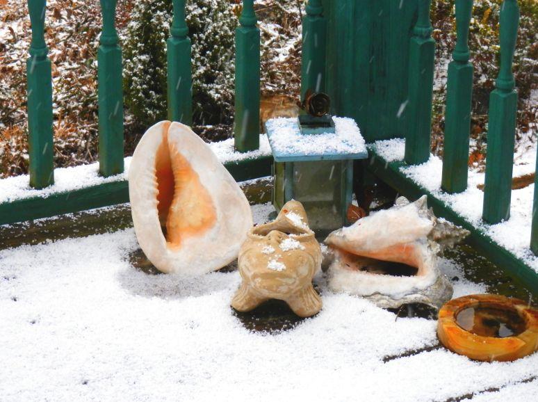 Snow Shells