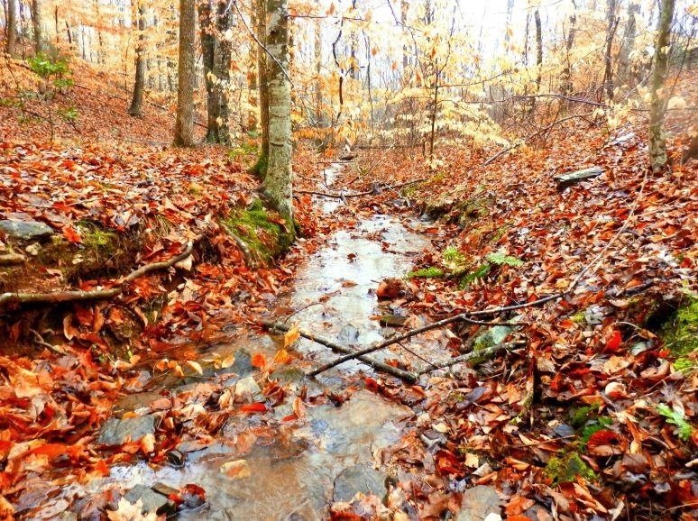 Carolina Hardwood Forest