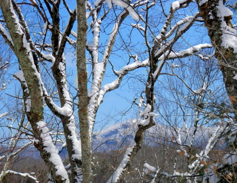 Grandfather Mountain Winter