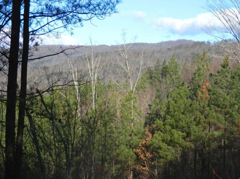 Wolf Pen Mountain Ridge