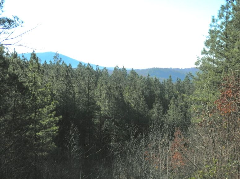 Loblolly Pine Ridge