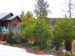 Hemlock House Evergreens