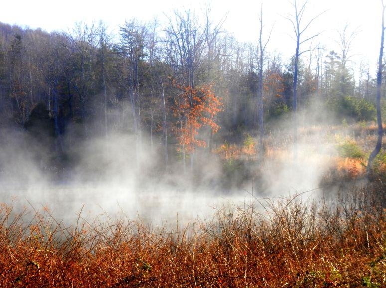 Otter Pond Mist