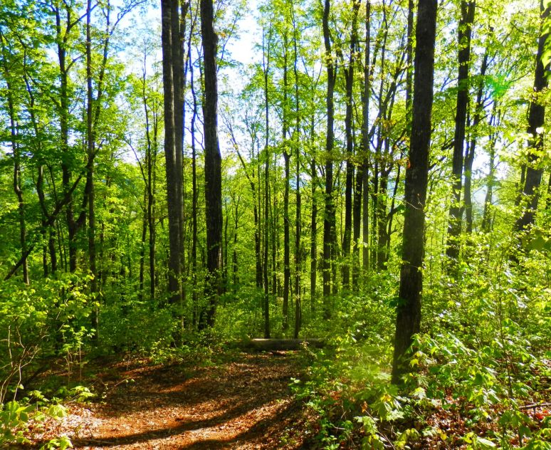 Oak Mountain North View