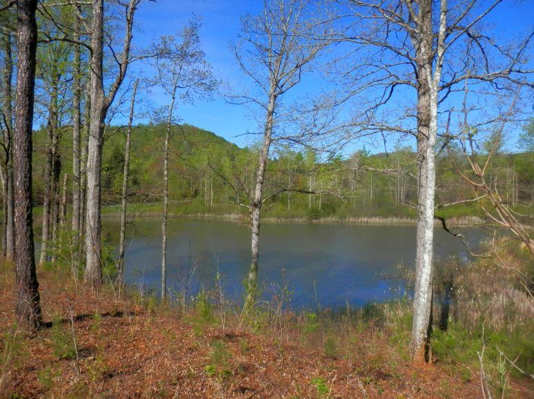 Otter Pond Blue