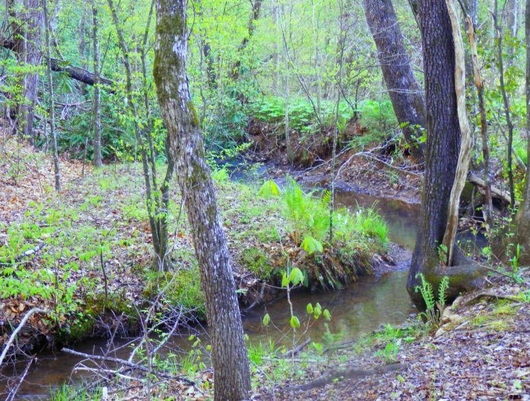 Slow Creek