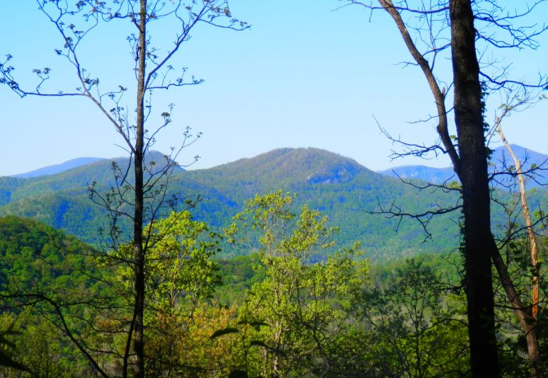 Young's Mountain Forest
