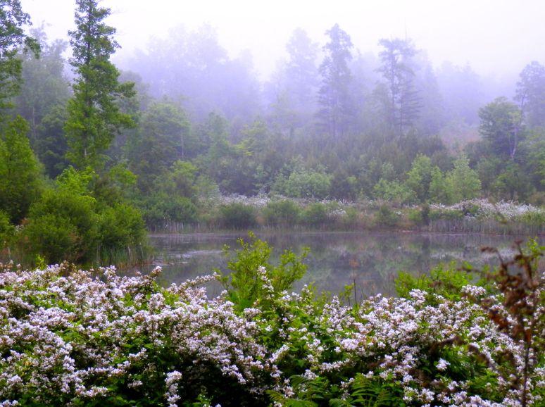 Blackberry Lake