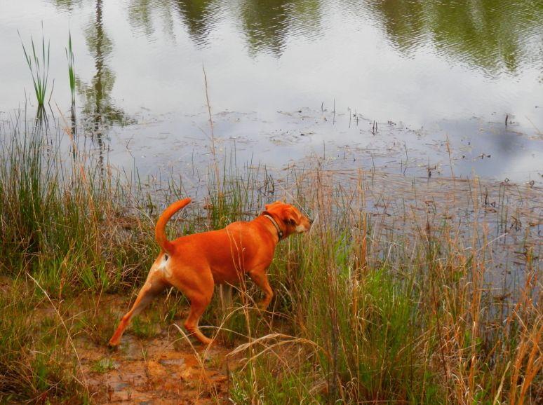 Buddy at Otter Pond