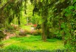 Biltmore Estate Lawn