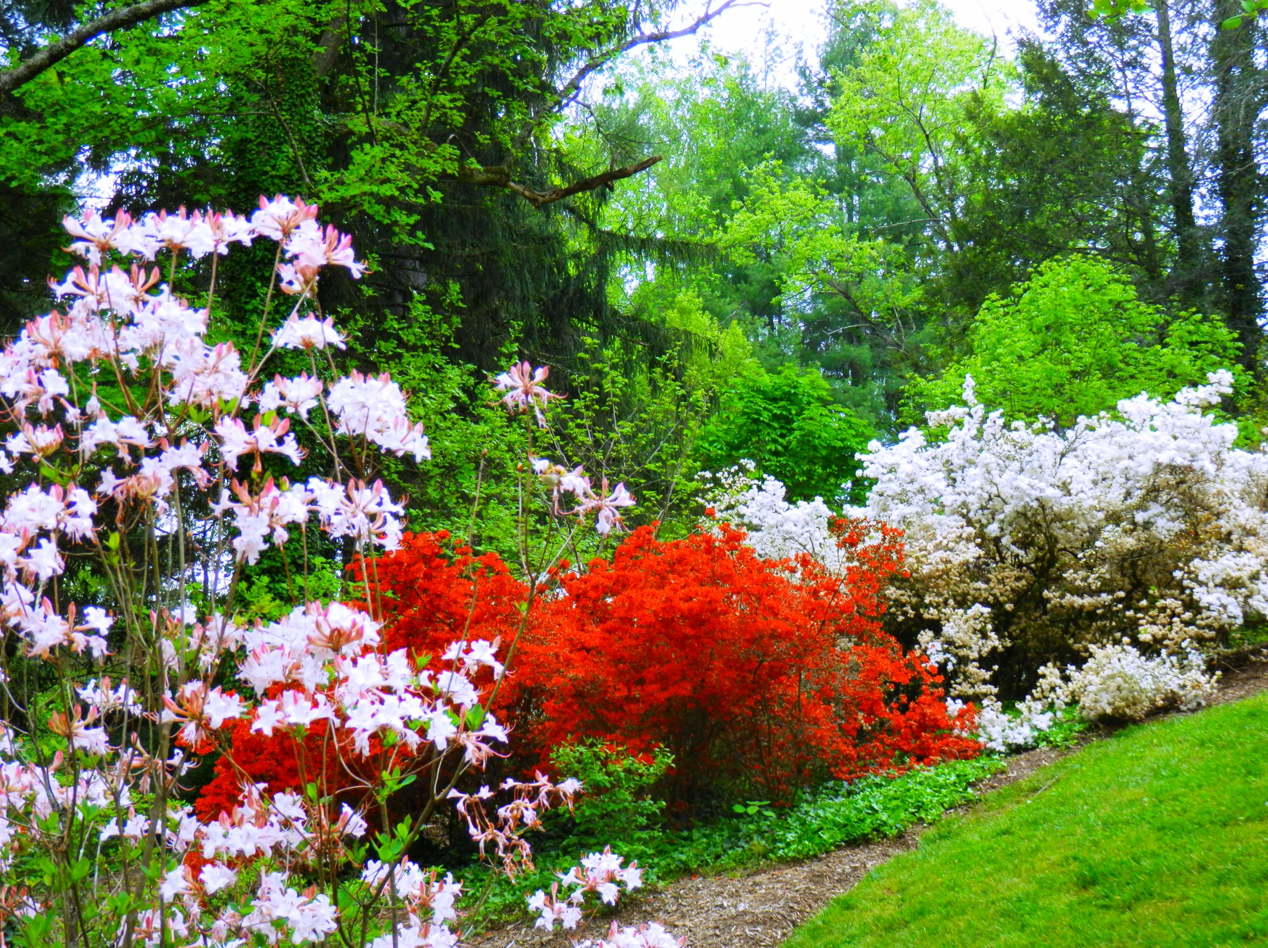 The Azaleas In The Gardens At Biltmore Living In The