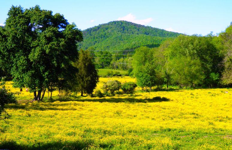Glenwood Pasture