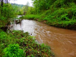 Otter Creek Currents