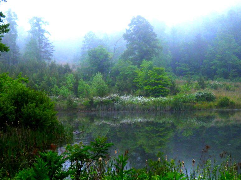 Foggy Otter Pond
