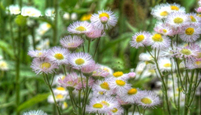Gatlinburg Wildflowers