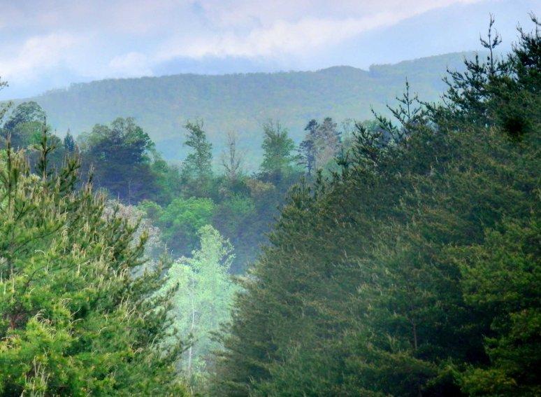 Wolf Pen Ridge