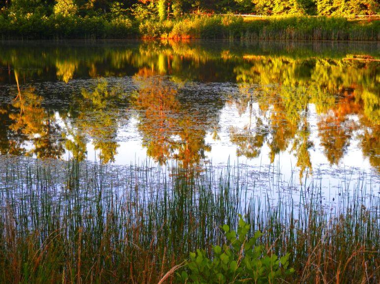 Otter Pond Reflections