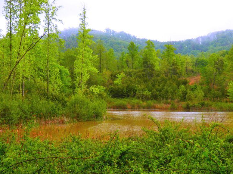 Muddy Otter Pond