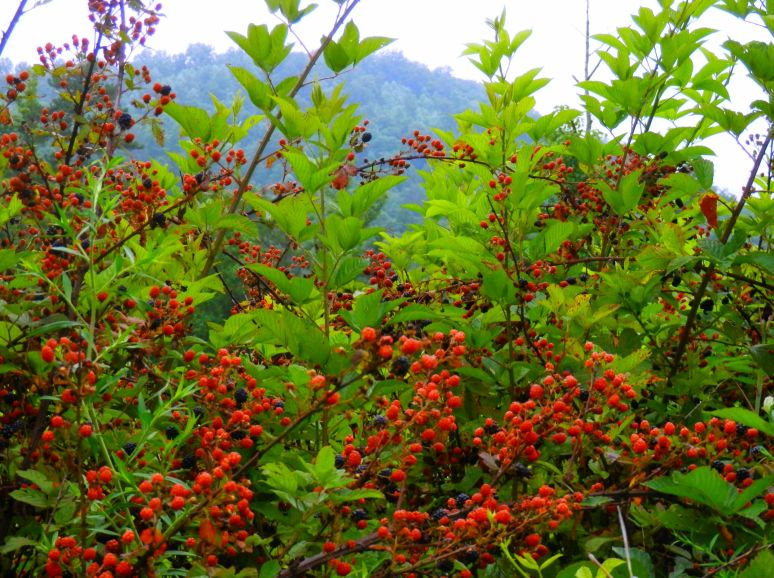 Mountain Berries