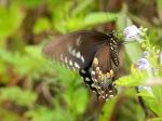 Feeding Flutterby