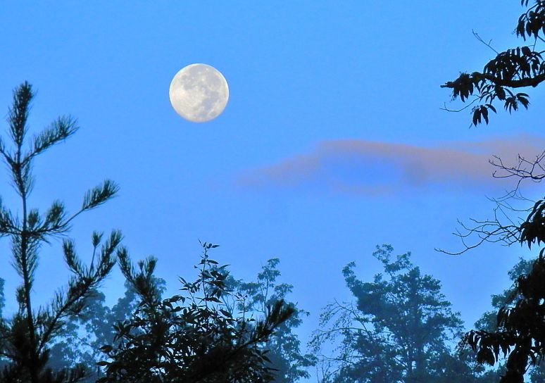 Carolina Moon Setting