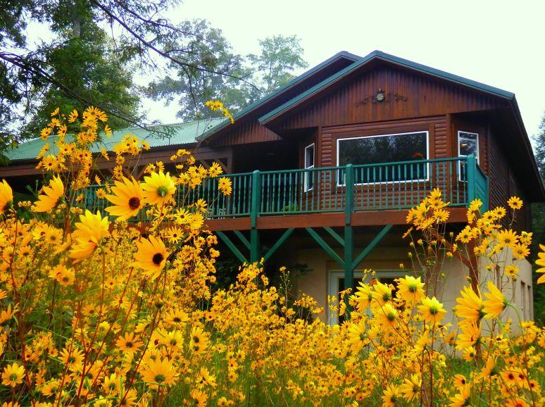 Sunflowers at Hemlock House