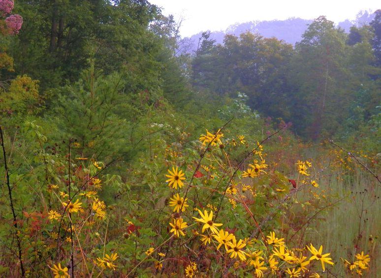 Oak Mountain Blooms