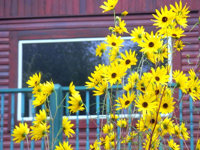 Sunflowers Window