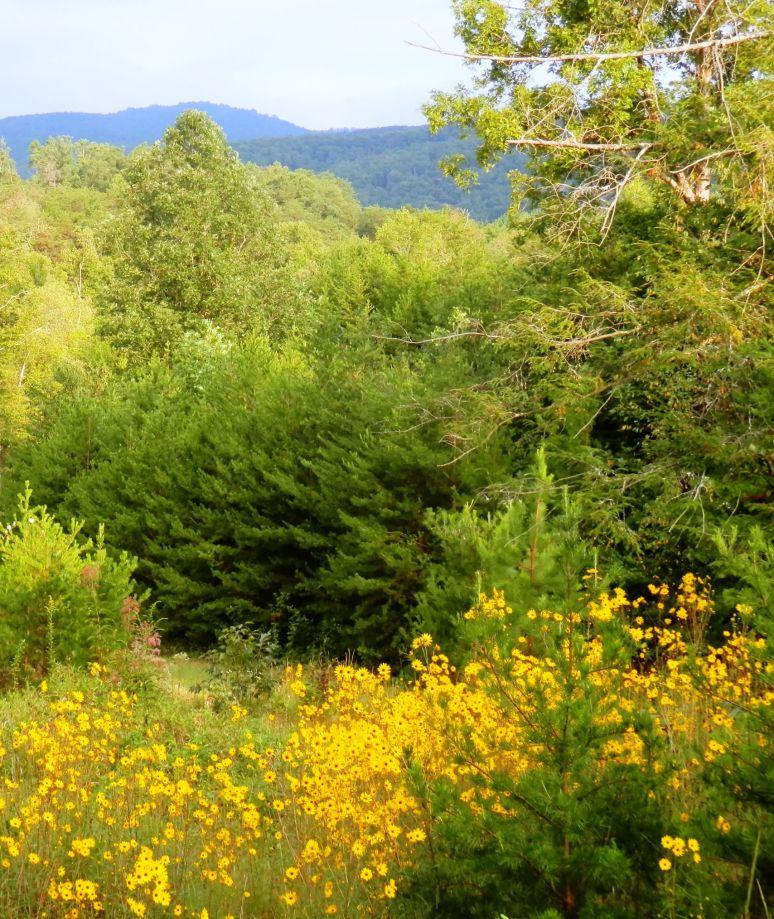 Sunflower Mountain