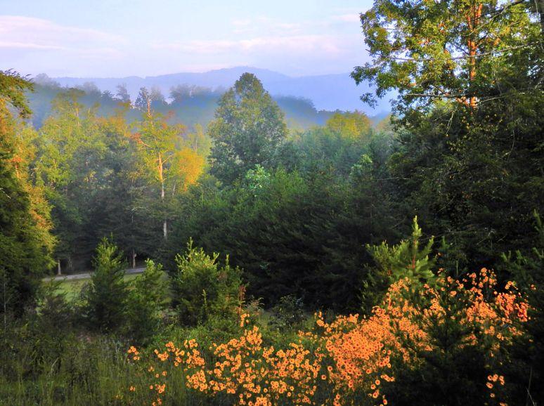 Wolf Pen Mountain Sunflowers