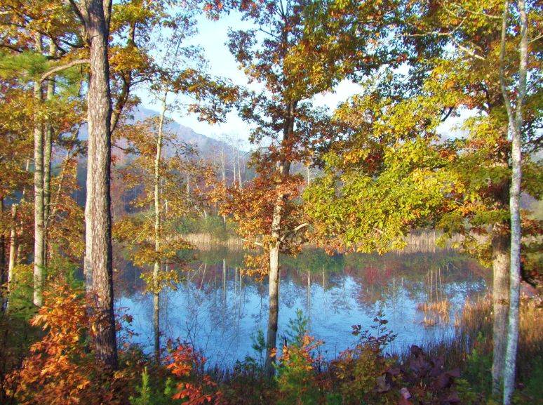 Otter Pond near Lake Lure