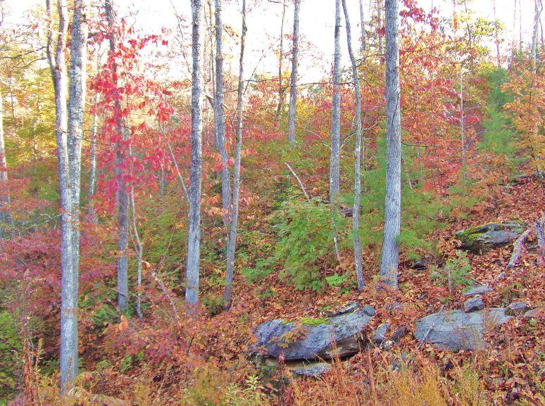 Carolina Rocky Ridge