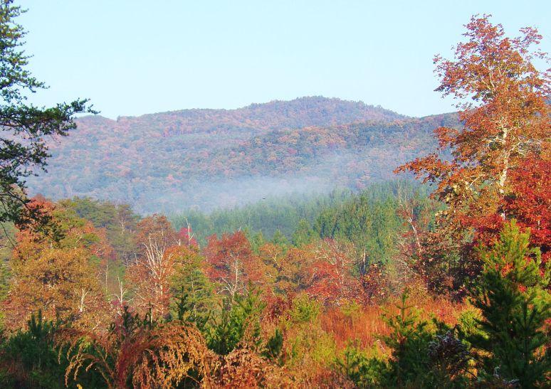 Wolf Pen Mountain Haze