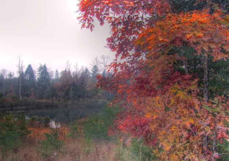 Red Oak Splendor