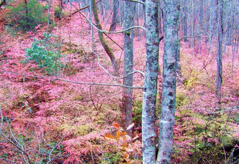 Best Pink Leaves