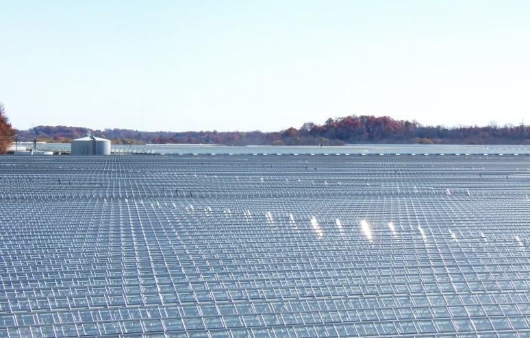 Metrolina Greenhouses 1