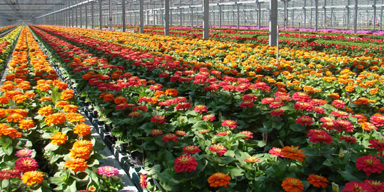 Metrolina Greenhouses 3