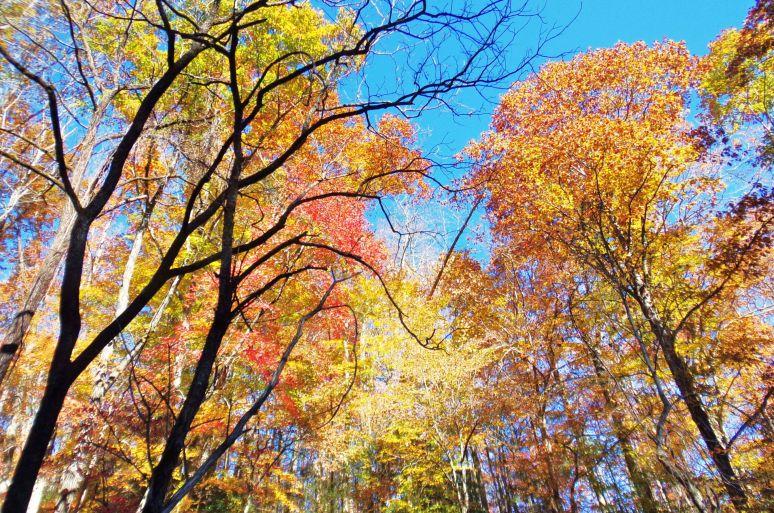 Cedar Creek Gorge Color