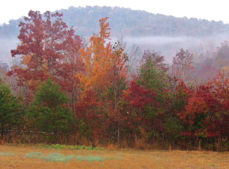 Oak Mountain Mist